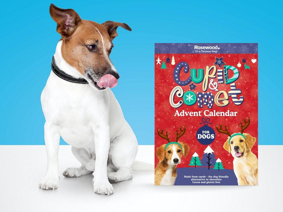 Cupid & Comet Hunde Adventskalender